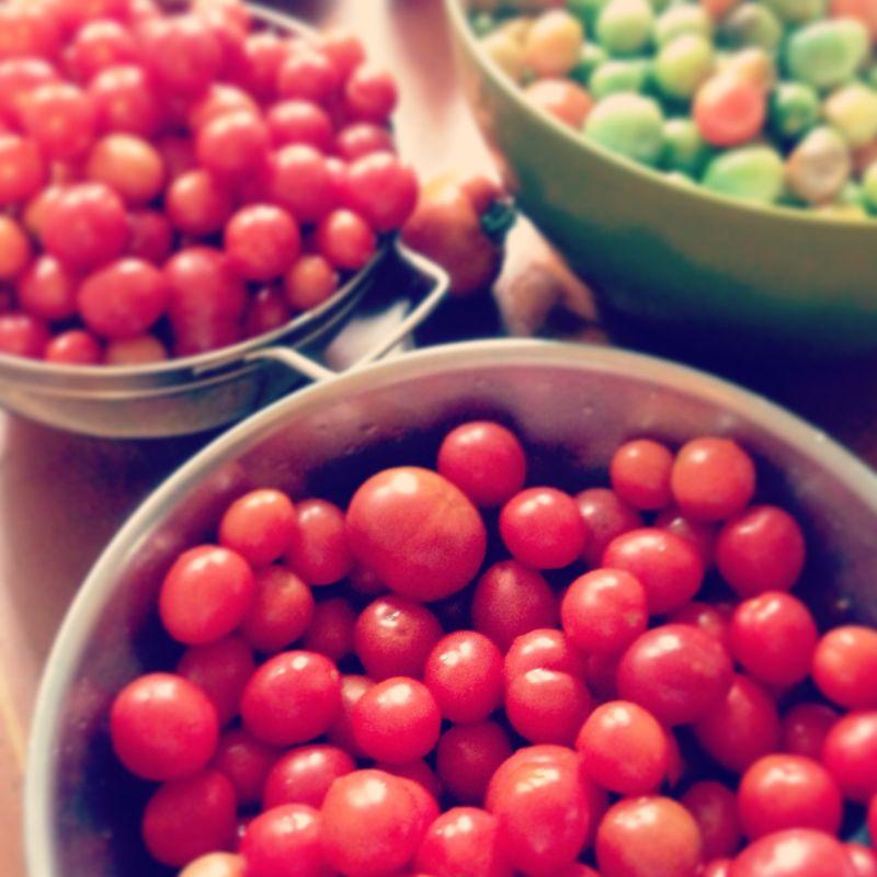 Fall 2013 tomato zucchini 013