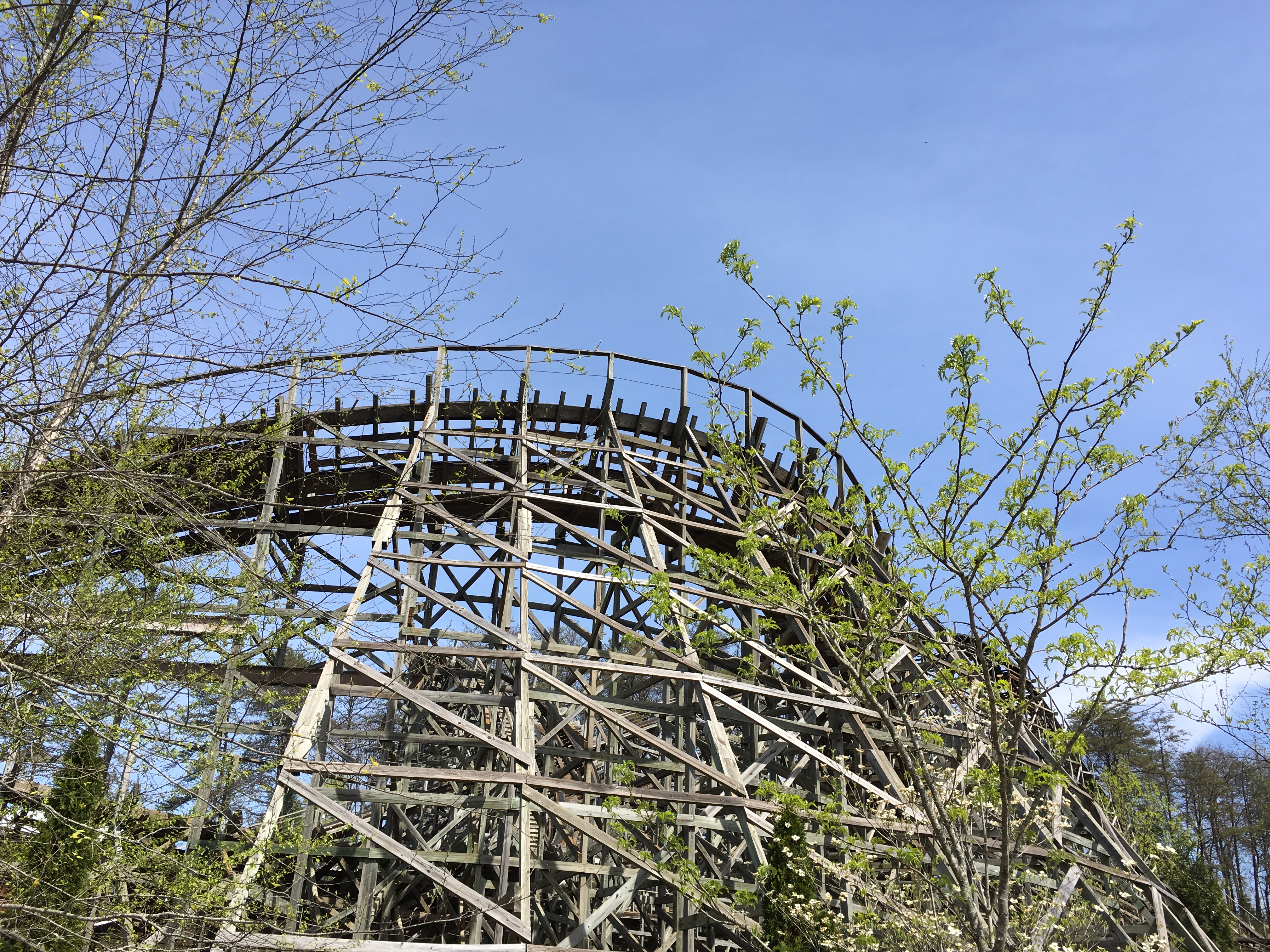 Rollercoasters and Wasps at Dollywood - Travels with Paprika